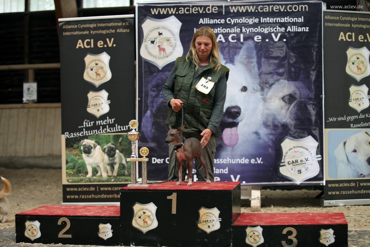 Best of Breed Kleinrassen: American Hairless Terrier