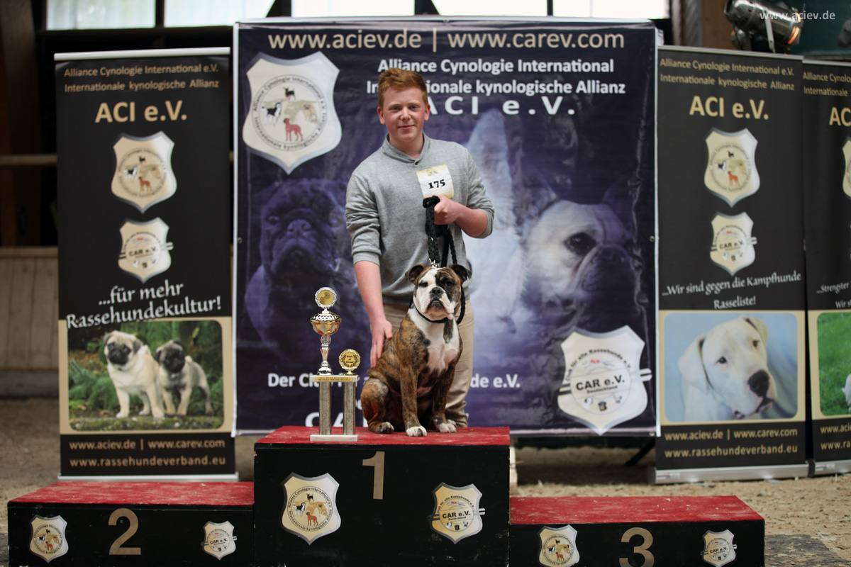 Best of Breed Großrassen: Old English Bulldog