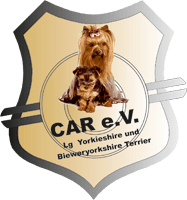 CAR e.V. Landesgruppe Yorkshire und Biewer-Yorkshire Terrier
