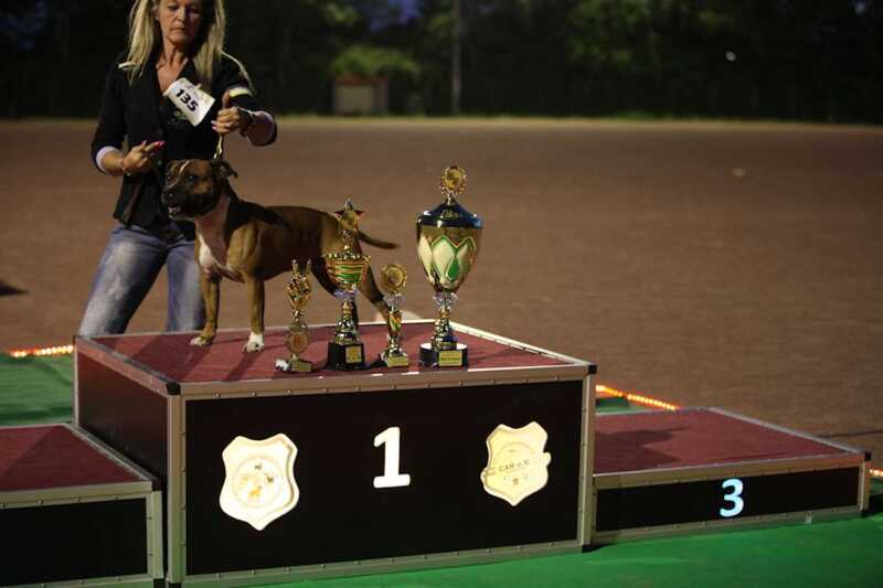 All Star Dog Show & Bundessiegerschau Gewinner in Ludwigshafen.