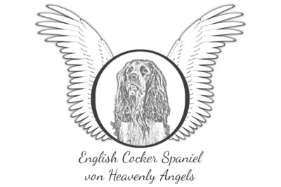 Liebhaberzucht English Cocker Spaniel