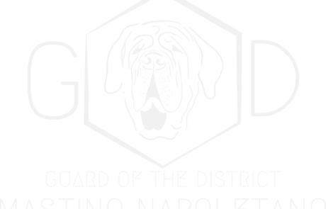 Mastino Napoletano Guard of the District grau