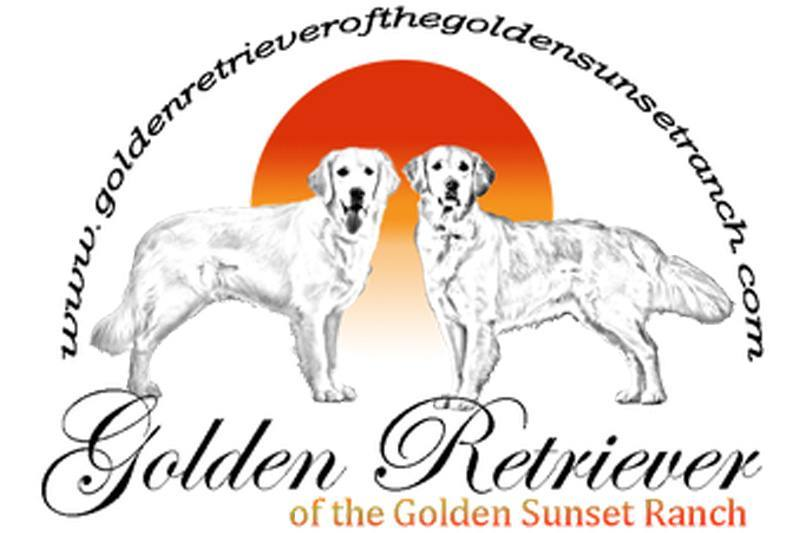 Golden Retriever of the Golden Sunset Ranch