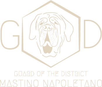 GoD- Guard of the district-Certified pugs and Mastinos breeders from Germany