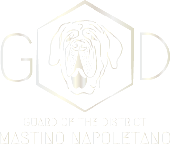 GoD- Guard of the district-Certified pugs & Mastinos breeders Germany
