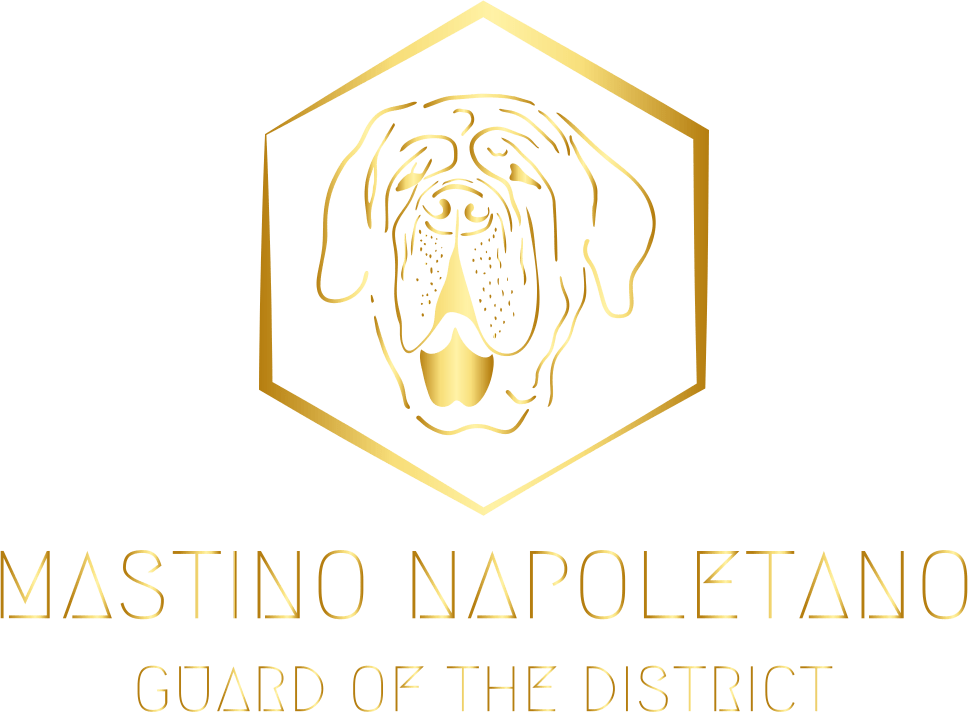 Mastino Logo 1200x800 Logo- Guard of the district-Mastino Breeding in Germany Frankfurt